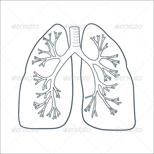 GraphicRiver Anatomical Lungs 6696641