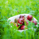 Cherries in a ceramic bowl on green grass - PhotoDune Item for Sale
