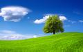 Nature green landscape - PhotoDune Item for Sale