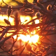 Spring Tree At Urban Sunset - VideoHive Item for Sale