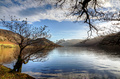 Two trees by Ennerdale Water - PhotoDune Item for Sale