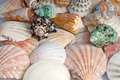 Seashells background - PhotoDune Item for Sale