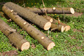 Pile of pine logs on green grass - PhotoDune Item for Sale