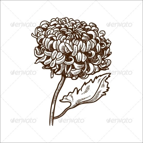 GraphicRiver Chrysanthemum Flower 6767835