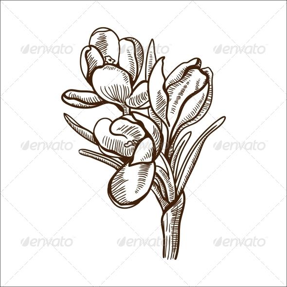 GraphicRiver Crocuses Flower 6767841