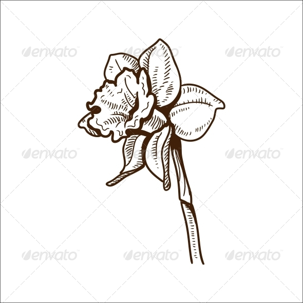 GraphicRiver Narcissus Flower 6767892