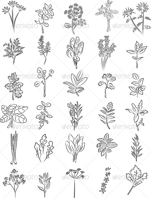 GraphicRiver Herbs Vector 6770070