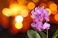 Orchid with lights - PhotoDune Item for Sale