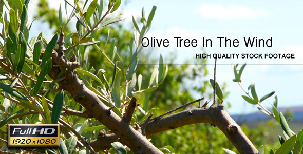 VideoHive Olive Tree In The Wind 02 6840779