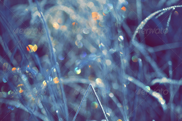Winter Scene With Spectrum Light Bokeh In Grass - Stock Photo - Images