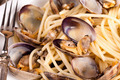 Spaghetti With Clams Closeup - PhotoDune Item for Sale
