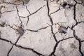 Deer tracks on cracked soil ground. - PhotoDune Item for Sale