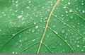 Fresh water drops on green leaf - PhotoDune Item for Sale