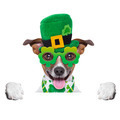 st patricks  day dog - PhotoDune Item for Sale
