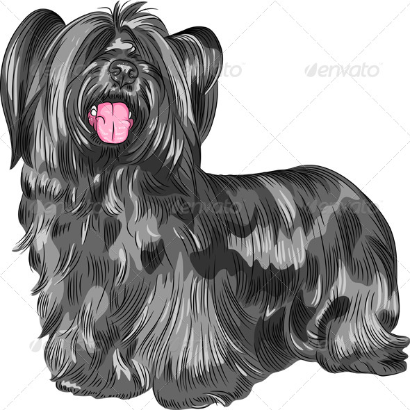 GraphicRiver Funny shaggy smiling dog Skye Terrier breed 6882121