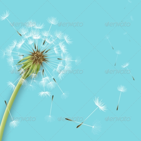 GraphicRiver White Dandelion 6884486