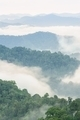 Beautiful fog in tropical forest. - PhotoDune Item for Sale
