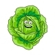 Green Cabbage - GraphicRiver Item for Sale