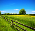 Spring field and blue sky - PhotoDune Item for Sale
