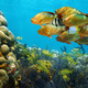 Shoal of colorful tropical fish in a coral reef - PhotoDune Item for Sale