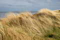 Dunes with beachgrass in spring - PhotoDune Item for Sale