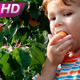 Boy and Apricot - VideoHive Item for Sale