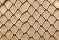 Snake leather texture - PhotoDune Item for Sale