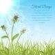 White Dandelions on Green Grass - GraphicRiver Item for Sale