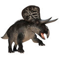 Dinosaur Zuniceratops  - PhotoDune Item for Sale