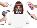 hairdresser dog - PhotoDune Item for Sale