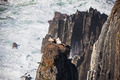 Storks Nest on a Cliff at Western Coast of Portugal - PhotoDune Item for Sale