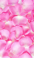 background of bright pink rose petals - PhotoDune Item for Sale