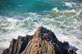Western Portugal Ocean Coastline. Wild Birds on a Cliff - PhotoDune Item for Sale