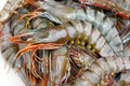 Tiger prawn - PhotoDune Item for Sale