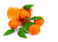 Bucket of fresh mandarins - PhotoDune Item for Sale