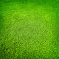 Green grass background - PhotoDune Item for Sale