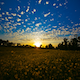 The Country Yellow Field Sunset - VideoHive Item for Sale