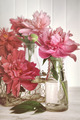 Peonies in milk bottles - PhotoDune Item for Sale