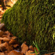 Green Moss On Rocks 2 - VideoHive Item for Sale