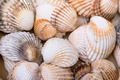 Heap textured sea shells - PhotoDune Item for Sale