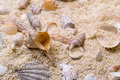 Sea shells with coral sand - PhotoDune Item for Sale