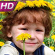 Child in Dandelions  - VideoHive Item for Sale