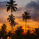 Tropical palm trees against the sky at sunset - PhotoDune Item for Sale