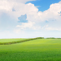 beautiful wheat field and blue cloudy sky - PhotoDune Item for Sale