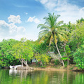 Tropical river with palm trees on  shores - PhotoDune Item for Sale