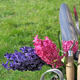 hyacinths and tools - PhotoDune Item for Sale