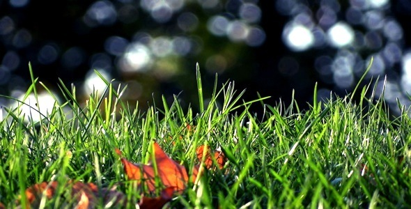 [VideoHive 737125] Grass & Forest Bokeh Loop | Stock Footage