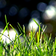 Grass & Forest Bokeh - Loop - VideoHive Item for Sale