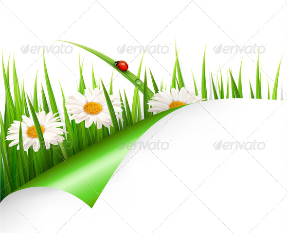 GraphicRiver Spring Background with Flowers Grass and Ladybug 7040015