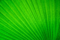 Abstract image of Green Palm leaves in nature - PhotoDune Item for Sale